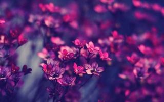 květiny, jaro, Fialová, makro, příroda