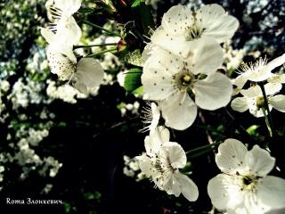 цвет, весна