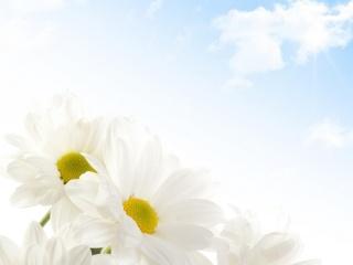 květiny, léto, slunce