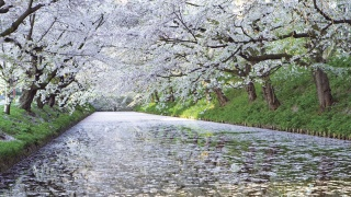 spring, nature, channel, river, trees, flowers, white, background
