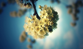 spring, flowers, Apple, tree, blue, background