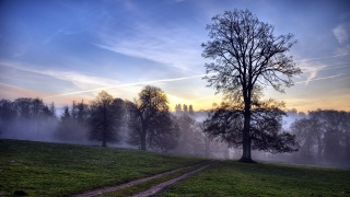 поле, дерево, дорога, пейзаж, закат