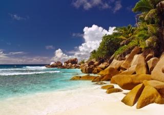 вода, океан, пальмы, пляж, море, острова, сейшелы, скалы