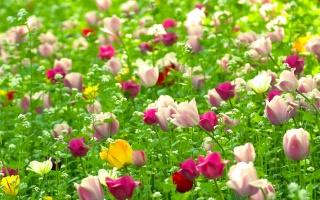 цветы, зелень