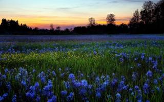 цветы, вечер