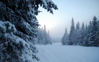 туман, деревья, снег, зима
