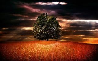 небо, поле, природа, цветы, трава, дерево, горизонт