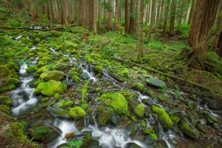 лес, мох, камни, ручей, деревья, Олимпийский национальный парк