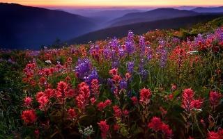 пейзаж, цветы, поле, горы