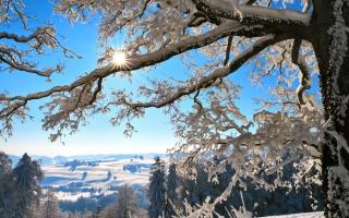 ветки, зима, Швейцария, снег, дерево, горы, солнце