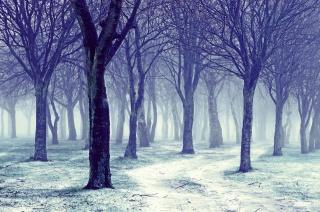 деревья, зима, голые, снег, зима, дорога, природа