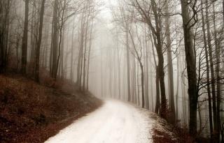 природа, зима, дорога, лес, туман, Зимний день, лес, путь
