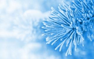 макро, ялинка, ялина, ялинка, сніг, блакитний, зима, сніг, зима, шпалери, широкоформатні, повноекранні, широкоекранні, HD шпалери, Фон, шпалери