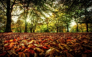 leaves, forest, the sun, light, autumn, trees, foliage, branches