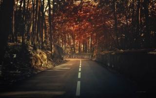 дорога, осень, деревья, лес