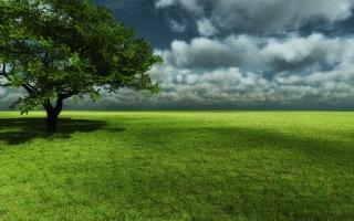 strom, pole, tráva, strom, sky, zelená