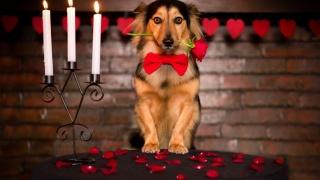 pes, květ, Sladké, zvíře