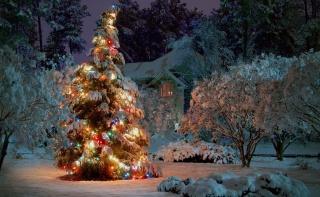 природа, зима, елка, Новый год, домик, красиво, позитив