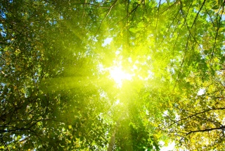 the sun, rays, trees, forest, nature
