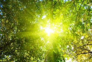 солнце, лучи, деревья, лес, природа