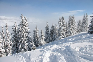winter, forest, snow, trees, the sky, beauty