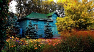 forest, house, tree, grass, flower, colors