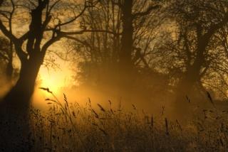 природа, вечір, золотий, світло, трава