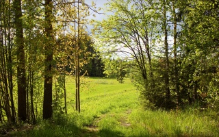 nature, path, summer, forest, greens, Sunny, trees