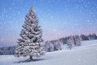 природа, краєвид, ялинка, сніг, зима, час року