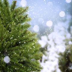 ялинка, сніг, зима