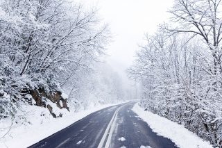 road, trees, snow, winter