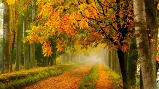 forest, nature, autumn, road