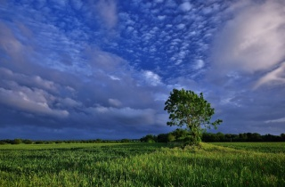 tree, field, clouds, nature