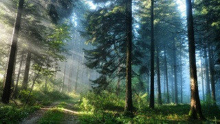 forest, nature