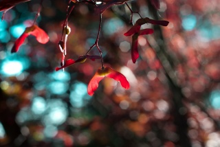 branches, blur, glare, macro, nature