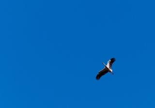the sky, blue, crane