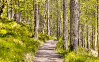 forest, Style, nature, texture, background, landscape