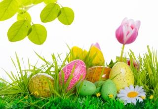 velikonoce, Velikonoce, tulipány, květiny, VEJCE