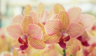 orchideje, květiny, příroda