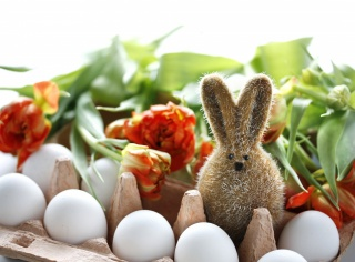 hare, Easter, flowers, EGGS