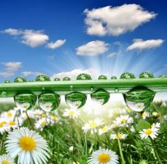 природа, краплі води, краса, відображення, квіти, ромашки