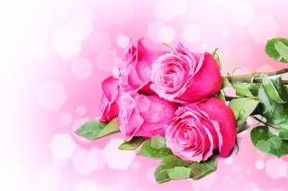 пелюстки, рожеві, квіти, стебла, троянди, букет
