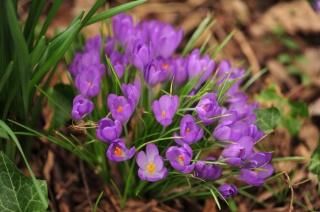 makro, jaro, příroda, květiny
