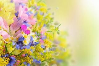 léto, kytice, kapky, okvětní lístky, květiny, sedmikrásky
