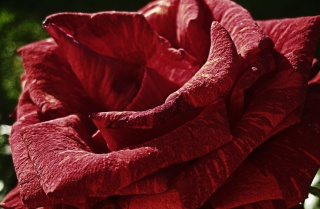 krát, makro, květina, příroda, tapety, květiny