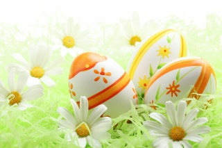 Easter, chamomile, holiday, EGGS