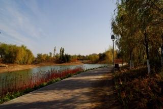 trees, autumn, Park, lantern, the pond