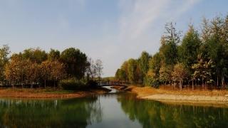 Park, the pond, trees, the bridge, autumn