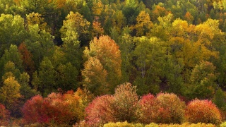 forest, trees, yellowness, autumn