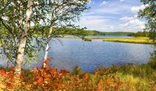 birch, the lake, yellowness, autumn